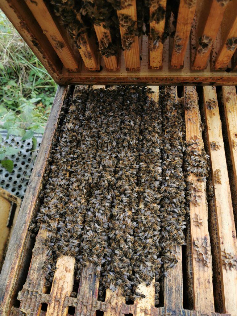 Bienenvolk im Dezember