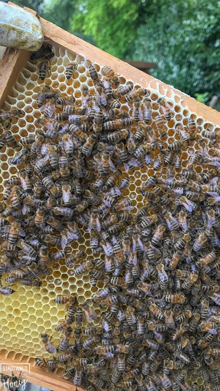 Blick auf eine Bienenwabe