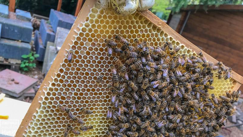 Blick auf einen Bienenwabe