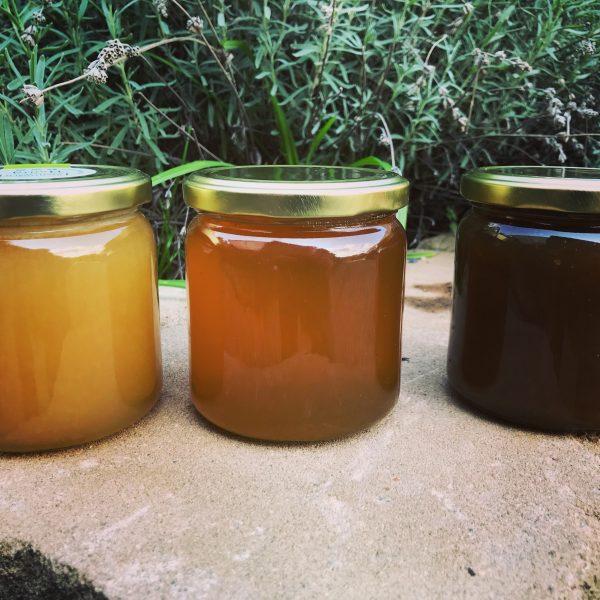 Unsere Honigsorten