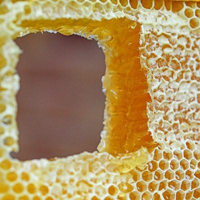 ausgeschnittene Honigwabe