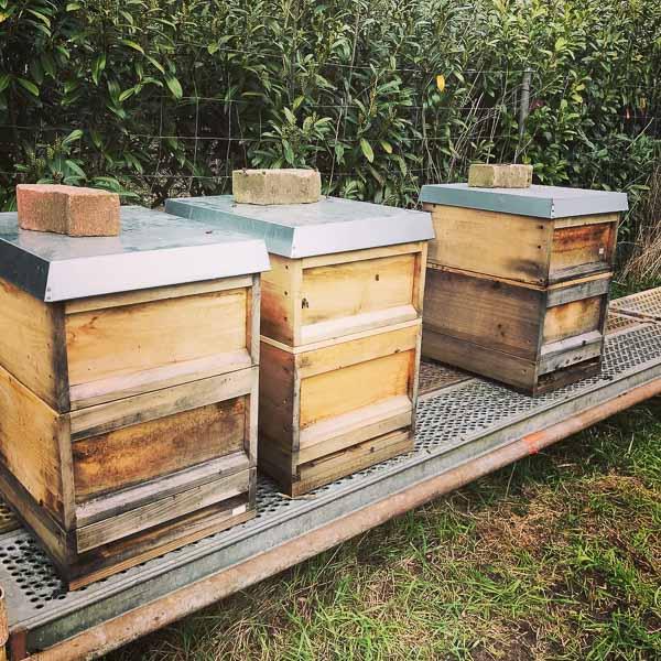 Bienenstand in Krefeld Gellep-Stratum